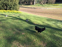Stadspark - Antwerpen (eyair) Tags: ashmashashmash belgium flanders antwerp antwerpen stadspark citypark chicken rabbit