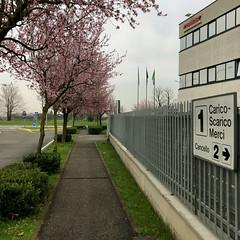 beginnings of spring (Paolo Cozzarizza) Tags: italia lombardia bergamo bonatesotto scorcio strada alberi fiori bandiera cartello piante aiuola
