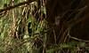 Heckenbraunelle (Renata1109) Tags: tier baum vogel wald heckenbraunelle bird outdoor animal braun gefieder