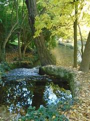 (sftrajan) Tags: parquedeloeste madrid spain españa noviembre november autumn trees park stream brook otoño arroyo herbst rivulet riachuelo マドリード espanha espanya espagne