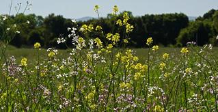 wild flowers in massive quantity