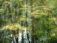 above and below (vertblu) Tags: stream streamsurface bythestream mirroring mirrored mirroredlandscape reflection reflections reflectedtrees reflectedskies reflectedclouds reflected distorted distortion spring springtime moody mood ambiance ripples rippling flowing flow flowingwater water waterabstract watersurface streambed abstractreflections abstract abstrakt abstraction abstractnature natureabstracted green greens shadesofgreen blue beige brown vertblu vert naturschutzgebiet naturepreserve preservearea preservationarea nsgweesenerbach lowersaxonygermany patterns patterning pattern