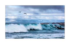 5915b Riding The Waves (foxxyg2) Tags: sea ocean sky pacific asilomar clouds gulls birds seabirds blue waves