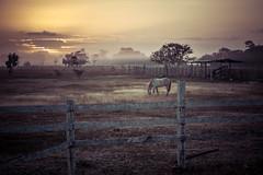 caballo al amanecer (Sergio_Pérez) Tags: amanecer caballo ef75300mm eosrebelt6 quintanaroo