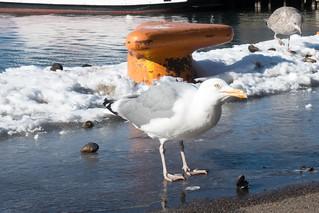 2018-03-18 Oslo (7)