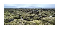 Moss Field (W.Utsch) Tags: iceland panorama sony canon tse tse24 tilt shift