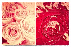 truth among roses (kazimierz.pietruszewski) Tags: abstract abstraction form composition digipaint digitalart concept graphic border diptych 21 monochrome truth stilllife