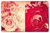 truth among roses (kazimierz.pietruszewski) Tags: abstract abstraction form composition digipaint digitalart concept graphic border diptych 21 monochrome truth stilllife 7dwf