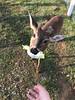 comen lechuga pero aman las galletas 🍪 (Stefa_Ramirez7) Tags: venado deer photograph photographer travel llano meta colombia animals love cute food