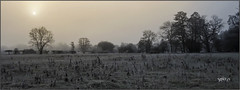 Hard Frost. (Picture post.) Tags: landscape nature green sunrise mist frost winter fields sun trees paysage arbre
