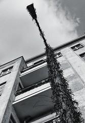 Monster! (TheBrokenLevee) Tags: berlin berlino blackandwhite bnw bandw streetlamp streetphotography street monster scary urban photography art architecture building sky clouds fuji fujifilm