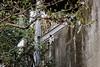 neko-neko2060 (kuro-gin) Tags: cat cats animal japan snap street straycat 猫 canon powershot pro1