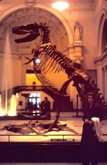 SUE the T. rex (moacirdsp) Tags: sue t rex in old position the field museum s lake shore drive chicago cook county illinois usa 1971