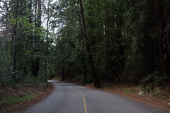 Redwood Road (mayawhit13) Tags: nature green redwoods road trees