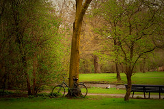 Park Scene (Clare-White) Tags: vondel green nature amsterdam leaves geese water depth brown bench door 7dwf landscape thechallengefactory winner