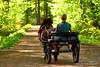 Eine Fahrt ins Grüne (grafenhans) Tags: sony alpha 700 alpha700 a700 dslr tamron 4056 70300 usd pony kutsche wald waldweg frühling licht light grafenwald bottrop nrw grün