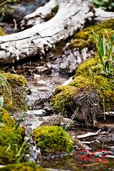 Tiny creek flow (RoManLeNs) Tags: romanlens romrom ut utah creek hikes hiking outdoors adventures adventure green nature flow water runningwater exploring naturaleza agua rom