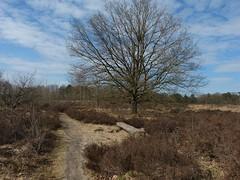 Nature area Buurserzand - It was too cold to take a seat :) (joeke pieters) Tags: 1380776 panasonicdmcfz150 buurserzand natuurgebied naturereserve natuurmonumenten twente overijssel nederland netherlands holland landschap landscape landschaft paysage bank bench