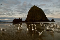 Haystack Rock (Chamblin1) Tags: cannonbeach oregon seagulls beach sand seascape haystackrock birds nature clouds winterspring