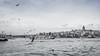 Vista del Cuerno de Oro desde el puente Gálata, Estambul. (Carlos Reusser Monsálvez) Tags: puentegalata torregalata galata estambul istanbul cuernodeoro gaviotas