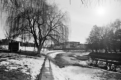 Urban spring (lupuszka) Tags: sun urban winter spring light cold trees tree sunlight star city town transylvania romania mures analog film fomapan200 fomapan