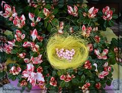 Il nido pasquale:-)))!! (antonè) Tags: fiori azalea nido uova pasqua auguri composizione burgos sardegna antonè