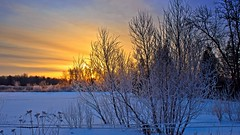 Sunrise over the Back 30 (Bob's Digital Eye) Tags: april2018 bobsdigitaleye canon canonefs1855mmf3556isll frost h2o hoarefrost laquintaessenza snow snowscene spring sun sunrise t3i yellow flicker flickr