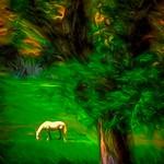 Horse & Tree thumbnail