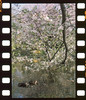 Pond (ai3310X) Tags: perforations carlzeiss ycontax sonnar t2885 リバーサル film agfa