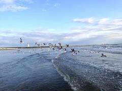 ZAANDVORD, NETHERLANDS ( NORTH SEA )