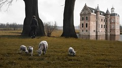 you can be (Mattijn) Tags: spring lamb stork horse swan duck forest castle willink videomontage mattepainting birds play roll tree song musicvideo grazing