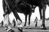 @Chennai (Raja. S) Tags: india rajasubramaniyanphotography marinabeach chennai tamilnadu people rajasubramaniyan frames