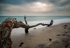 Am Weststrand (tosch_fotografie) Tags: meer nordsee strand landschaft sonnenuntergang langzeitbelichtung lzb ast baum wellen sand weitwinkel olympus omd em1 12mm f20 landscape seascape sunset beach northsea tree longtime exposure