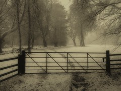 Winter mono-Snow shower (xDigital-Dreamsx) Tags: woodland nature naturephotography landscape rural forest woods wald gate fence mood mono monochrome blackandwhite trees tranquility serene snow cold ice frozen countryside