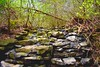 I took a nature walk (alexis.summers) Tags: beauty active nature