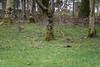 The Bunnies lie in wait... (DJNanartist) Tags: nikond750 nikon28300mm lakedistrict anartist castlerigg killerbunnies derwentwater keswick