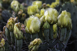 Promise of Cactus