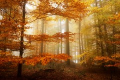 AutumnInGermany (BphotoR) Tags: fog forest woods bphotor germany herbst trees