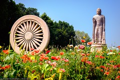 Sarnath - Giant Buddha Statue in Sarnath town (Robert GLOD (Bob)) Tags: god gods art buddha buddhism carving dieties diety flower flowers model plant plants religion religious spiritual spirituality statue statues in ind india varanasi benares uttarpradesh inde