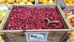 Cranberries (David E Henderson) Tags: edgartown massachusetts unitedstates cranberries carver farm fresh fruit