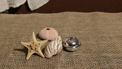 Sea Shells and a Bell (N.the.Kudzu) Tags: home tabletop stilllife seashells silver bell canon70d