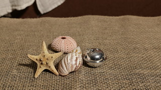 Sea Shells and a Bell
