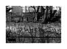 (billbostonmass) Tags: adox silvermax 100 film 129silvermax1100min68f fm2n cv 40mm ultron sl2 epson v800 boston massachusetts sullivan square delik graffiti
