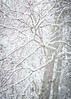 White on White on White on White (lclower19) Tags: snow storm trees white newengland