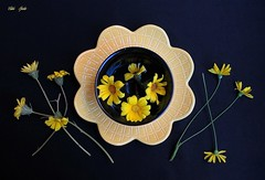 The Sun Is There (Esther Spektor - Thanks for 12+millions views..) Tags: stilllife naturemorte bodegon naturezamorta stilleben naturamorta creativephotography art composition spring flowers plate bowl allegory ceramics ambientlight yellow black estherspektor canon