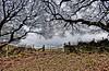 Top (Tobymeg) Tags: scotland tower hill dragan effect gate trees sky cloud panasonic dmcfz72