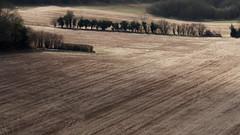 Pewley Downs -E3200408-Edit (tony.rummery) Tags: abstract downs em10 field guildford landscape mft microfourthirds omd olympus pewley stubble surrey surreyhills trees england unitedkingdom gb