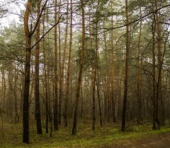 Morning forest (vandorlilla) Tags: natuer morning green brown trip canon hun hungary transition