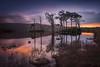 Meraki (Cameron-Jenny) Tags: landscapephotography petportraits scotland uk jennycameron2018 meraki assynt loch geopark highlands lochinver haida filters scots pines nc500