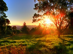 Orange evening rural I (elphweb) Tags: hdr highdynamicrange nsw australia rural farm sunset tree trees forest bush farms farmland dairy